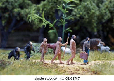 Miniature of Theory of evolution of man. Human development.