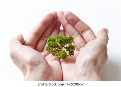 Miniature tree in hands