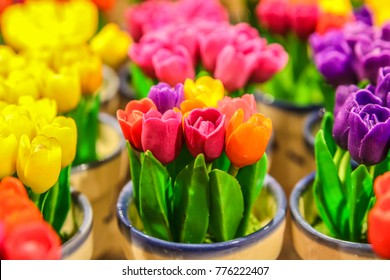 miniature tulips in a pot