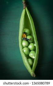 Miniature woman sitting in a green pea pod. Taking a break with some healthy organic produce. Fresh, healthy choices and growth concept. Female podcaster is sipping tea or coffee. A very tiny vegan.