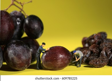Miniature Workers Turning Grapes into Raisins