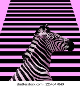 Minimal Contemporary collage art.  Zebra and zebra background.