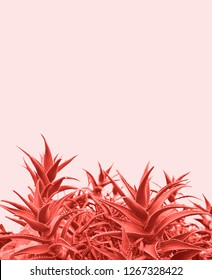 Minimal contemporary creative design with aloe plant in coral color of the year. Unique and trendy surreal pastel background. Bright pink tropical succulent. Abstract nature.