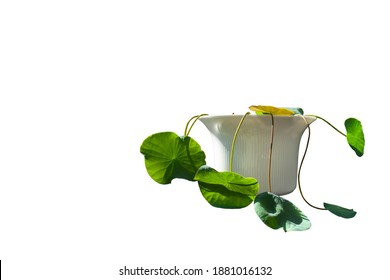 Minimal and di-cut of small lotus plant in the white bowl on with sun light shade in white background