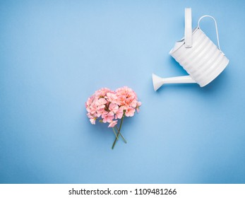 Minimal flat lay with watering concept on blue pastel background. Pink flowers