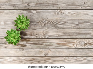 Minimal floral flat lay. Succulent plants on rustic wooden background