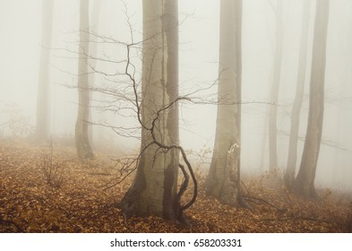 minimal forest landscape with trees in fog