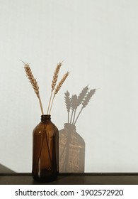 Minimal home concept. Brown vase made of glass with rye against white background.