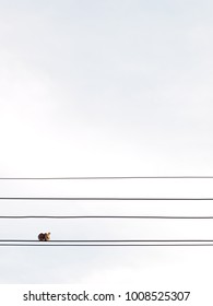 minimal photo as graphics outline of tropical asian brown zebra doves on electric cable wire under morning sunlight on a sunny day with light clear blue sky copy space peaceful empty background