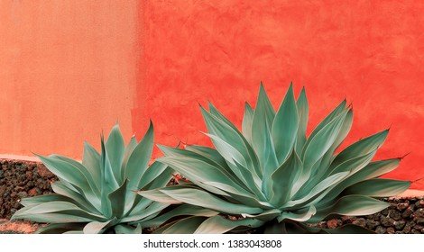 Minimal plants on pink art. Aloe. Plant lover concept