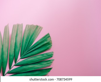 minimal summer background concept with coconut or palm leaf on pink pastel background