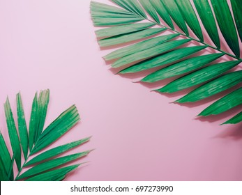 minimal summer background concept with green palm leaf on pink pastel background