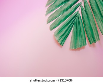 minimal summer background concept with palm leaf on pink pastel background