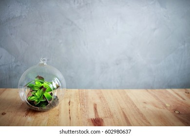 Minimal of a terrarium on a wooden table with a cement background over exposure and soft focus