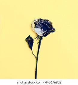 Minimalism Art. burnt Rose. Dramatic fashion