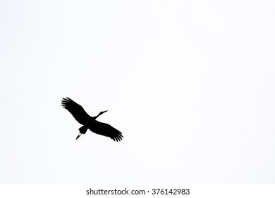minimalism silhouette Asian openbill bird flying on the sky in black and white