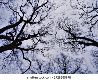 Minimalist black and white shot of silhouettes of tree branches contrasting with grey sky. Photo taken from unusual angle in park in Krakow Poland. Concept of scary, spooky, eerie, mysterious nature.  - Shutterstock ID 1929285998