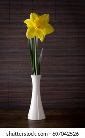 Minimalist composition with daffodil flower in vase