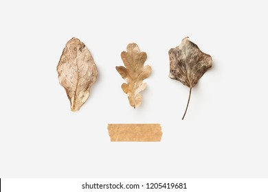 minimalist conceptual autumn / fall background with three different leaves on a bright showing a neutral seasonal color palette or gradient, paper tape as copyspace, flat lay