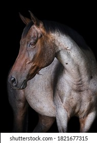 Minimalist equine portrait on black background.