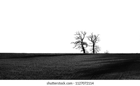 Minimalist high contrast black and white landscape with a stark winter sky broken only by bare trees. The late evening sun casts dark shadows over the field.