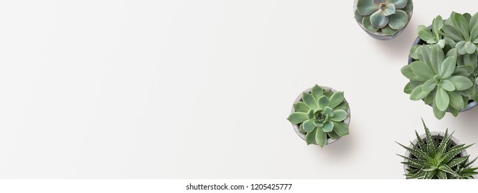 minimalist modern banner or header with succulent plants on a white surface with lots of copyspace for your text - top view / flat lay