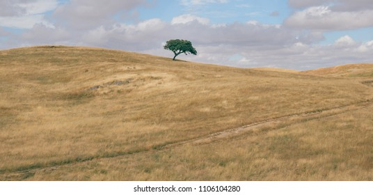 Minimalist panorama of a rolling hilly plowed field with solitary suber cork oak tree, Quercus Suber, captured at Portugal's Alentejo region.