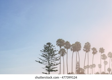Minimalist Photograph with Palm Trees
