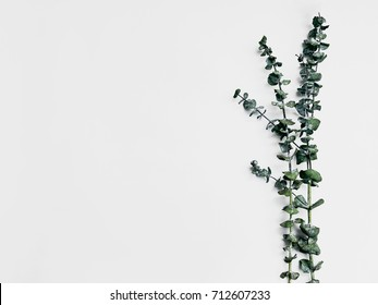 Minimalist plant background Bright green branch is lying on a white background Flat lay Modern minimalistic mockup with empty space