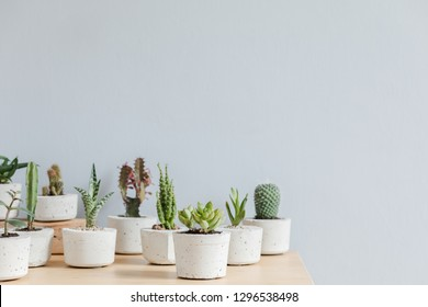 Minimalistic home interior with composition of cacti and succulents on the wooden table in hipster cement pots. Grey walls. Stylish and floral concept of home garden. Copy space.