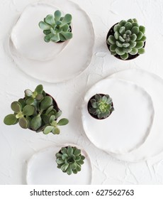 Minimalistic still life with ceramic plates and green succulents