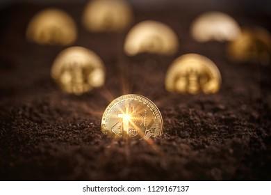 Mining Golden Bitcoins, shiny coin bitcoin in soil