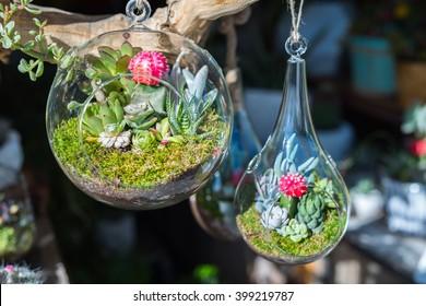 Mini-succulents in glass terrariums.