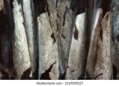 Mink coat. Fur. Background. Texture.