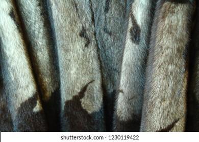 Mink coat. Fur. Close-up. Background. Texture.