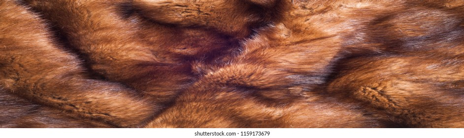 Mink fur animal . a small, semiaquatic, stoatlike carnivore native to North America and Eurasia. The American mink is widely farmed for its fur,