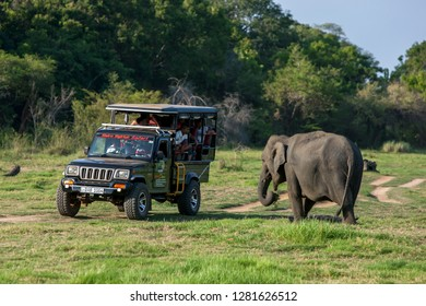 MINNERITA, SRI LANKA - AUGUST 08, 2016 : An elephant grazes next to a tourist safari jeep within Minneriya National Park in central Sri Lanka in the afternoon.