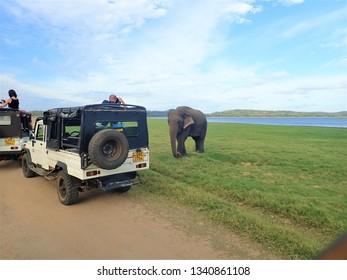 Minneriya, Dambulla / Sri Lanka - July 16th, 2018: Jeep safari at Minneriya national park in Sri lanka
