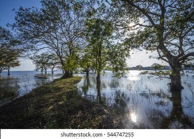Minneriya reservoir nature reserve, Sri Lanka