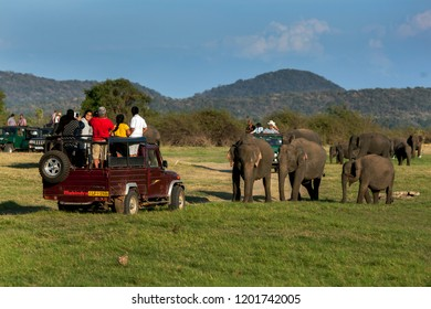 MINNERIYA, SRI LANKA - AUGUST 23, 2013 : Tourists in safari jeeps take photos of a herd of wild elephants grazing in Minneriya National Park in the late afternoon.