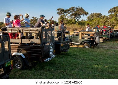 MINNERIYA, SRI LANKA - AUGUST 23, 2013 : A row of safari jeeps loaded with tourists watch a herd of wild elephants grazing in Minneriya National Park in the late afternoon.