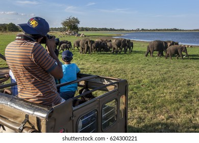 MINNERIYA, SRI LANKA - AUGUST 23, 2013 : A tourist in a safari  jeep taking photos of a herd of wild elephants grazing next to the tank (man-made reservoir) at Minneriya National Park in the afternoon