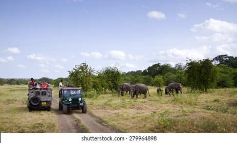 Minneriya, Sri Lanka - June 19, 2014: Tourist make game drive in Mynneriya national park. This park is famous to spot herds of wild asian elephants (specie elephas maximus maximus)