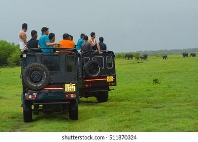 MINNERIYA, SRI LANKA ? NOVEMBER 02: Tourists are watching wild elephants from a safari jeep in Minneriya National Park on November 02 2016 in Minneriya, Sri Lanka