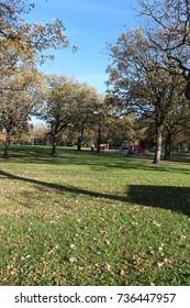Minnesota Autumn - Trees in a Park