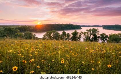 Minnesota Summer Flowers