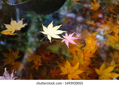 Minoo Park, Japan - November 2014 : Maple leaves on the water