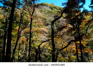 Minoo Park, Japan - November 2014 : Fall Trees