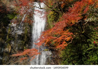 Minoo Park, Japan - November 2014 : Waterfall and Fall Trees