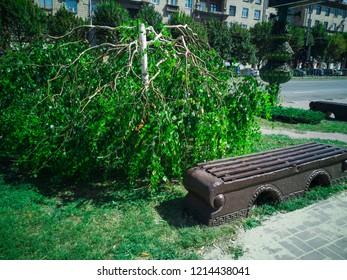 Minotaur weeping willow tree. Zaporozhye, Ukraine, 24 August 2018.